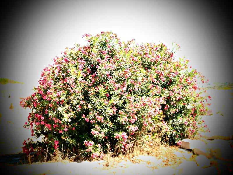 Kourion Chypre blog lifestyle lemagalire