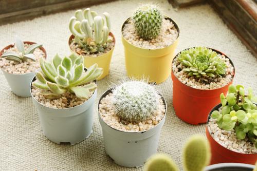 cactus blog lifestyle provence lemagalire