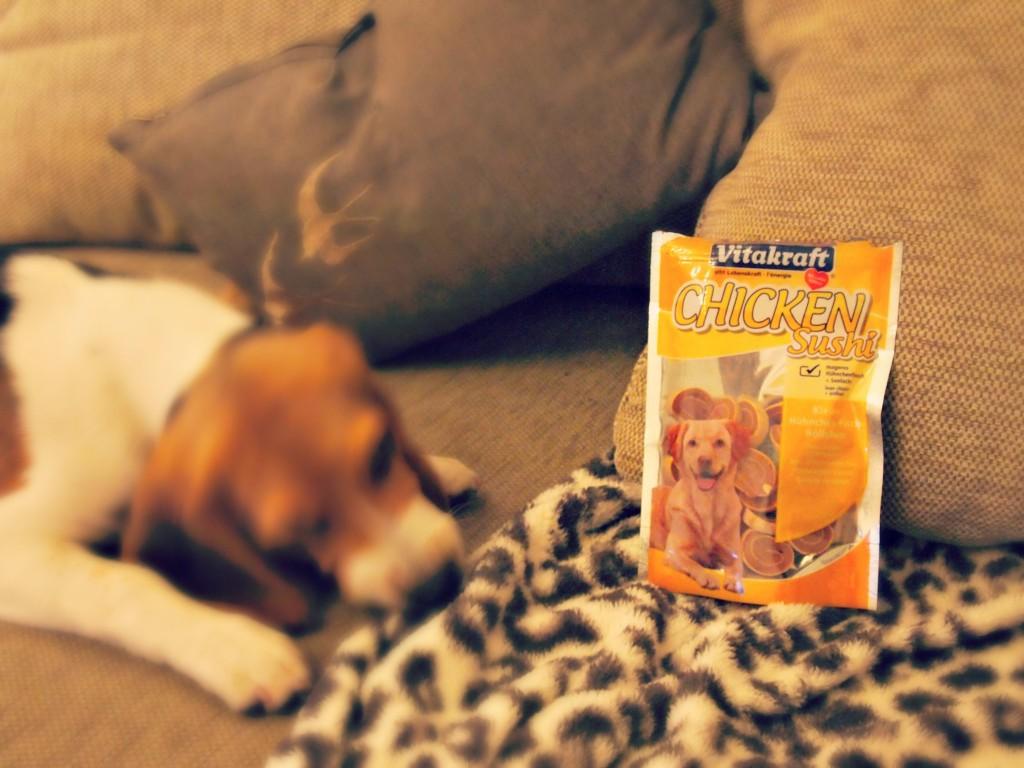 Jet fête ses 4 mois avec la Doggy Box