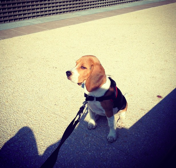 jet beagle blog lifestyle marseille