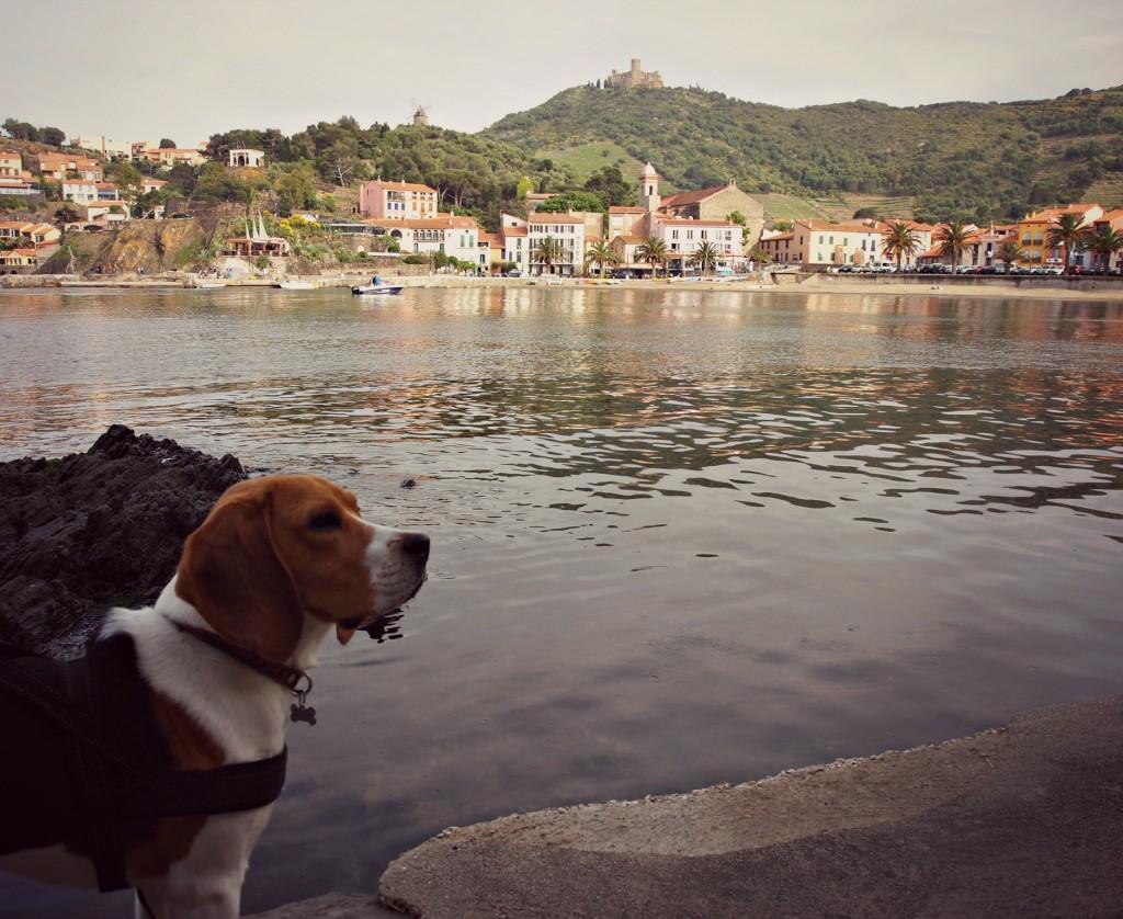 jet beagle blog lifestyle marseille
