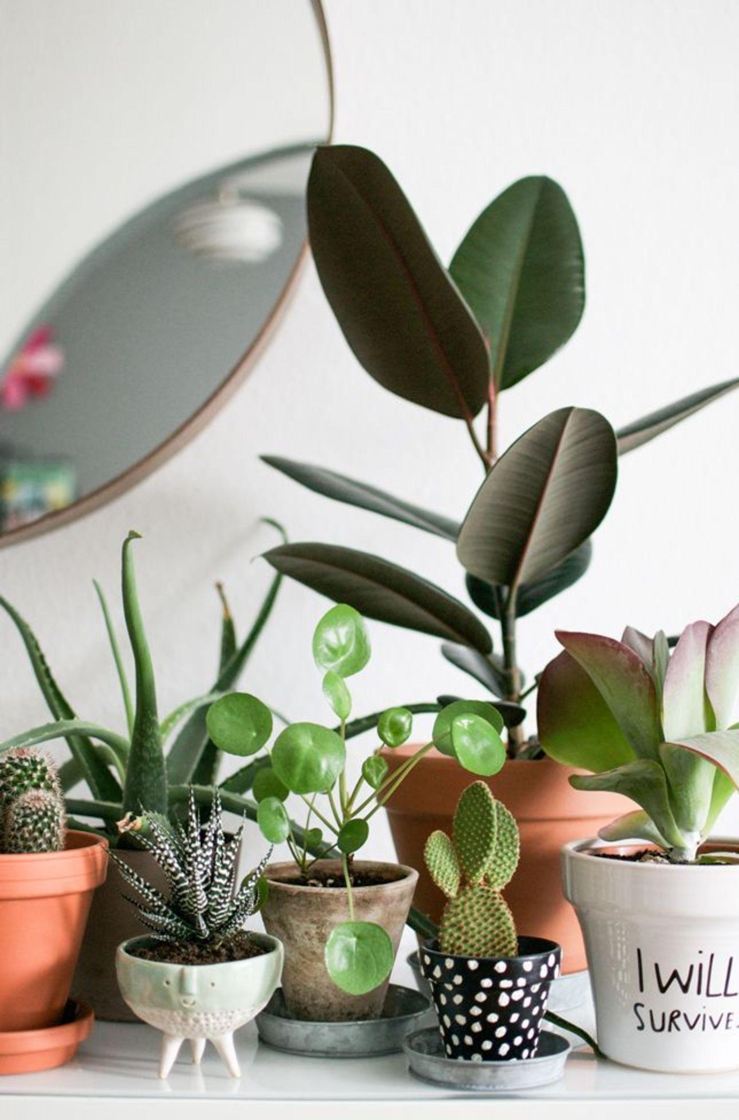 plantes vertes déco blog lifestyle marseille