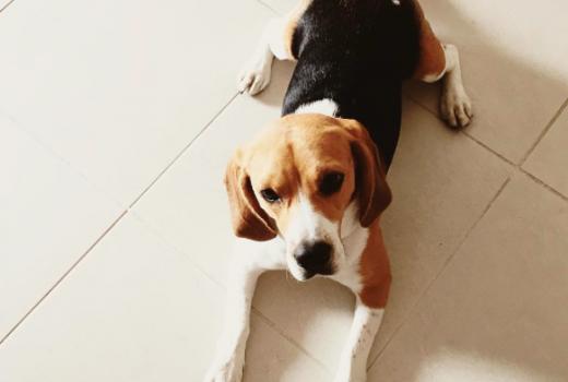 En voyage avec son chien blog lifestyle marseille lamagalire