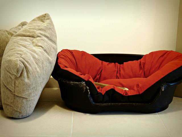 Prendre soin de son beagle blog lifestyle marseille lemagalire