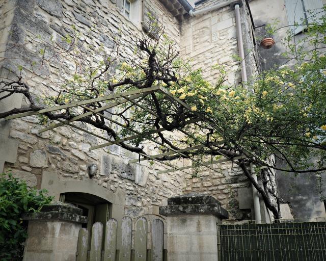Saint Remy de Provence blog lifestyle marseille lemagalire