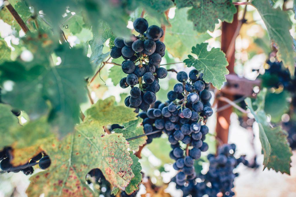 tout savoir sur le vin naturel blog lifestyle Provence Le Mag à Lire
