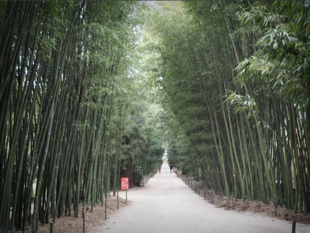 La Bambouseraie des Cévennes Anduze