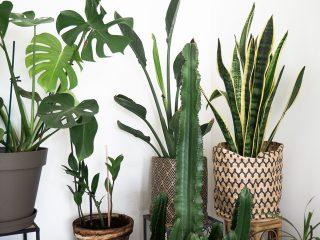 Plantes vertes hiver