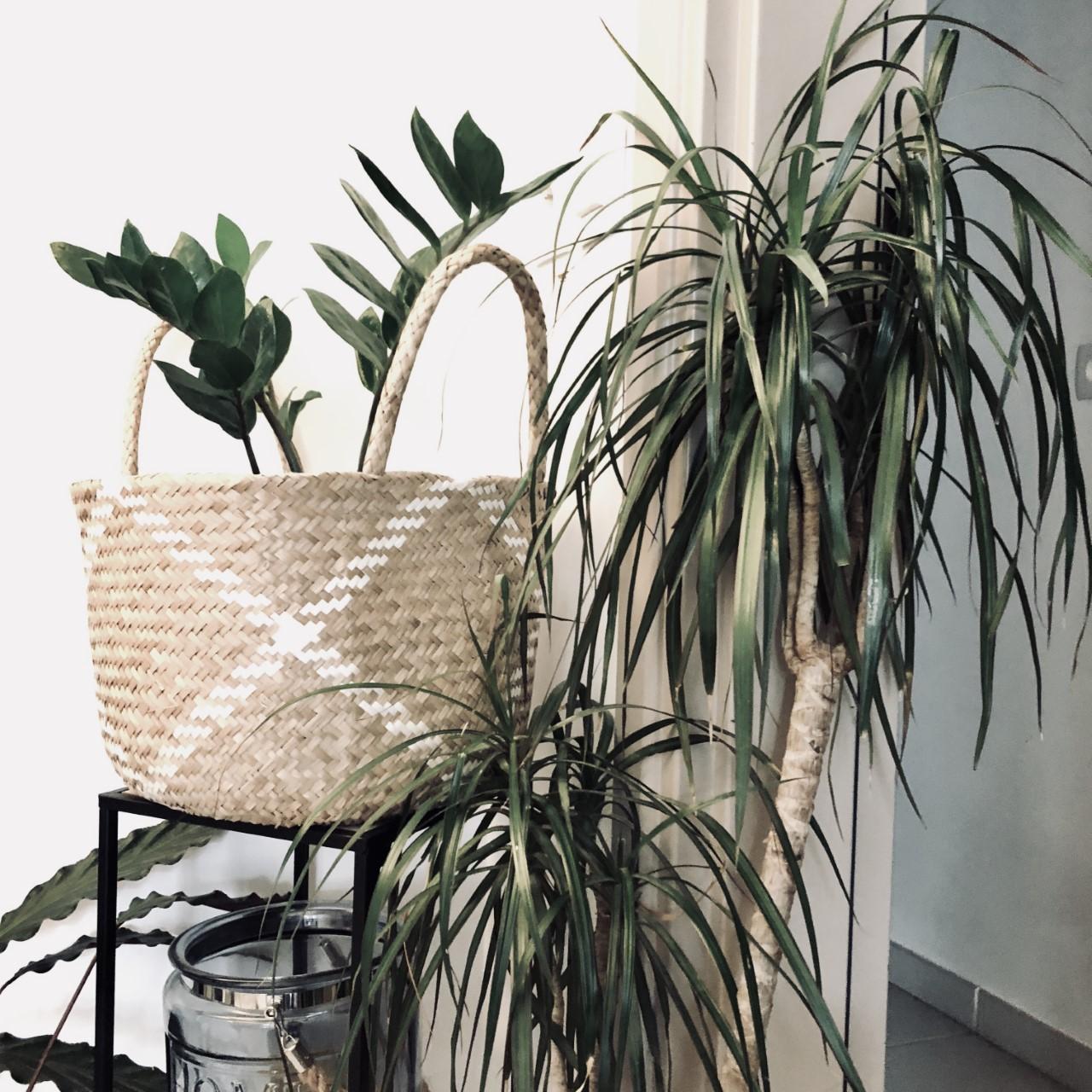 Soins plantes vertes blog le mag à lire