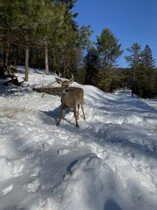 Parc Oméga activités Québec hiver